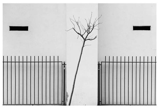 Todas las imágenes ©Paolo Martelli