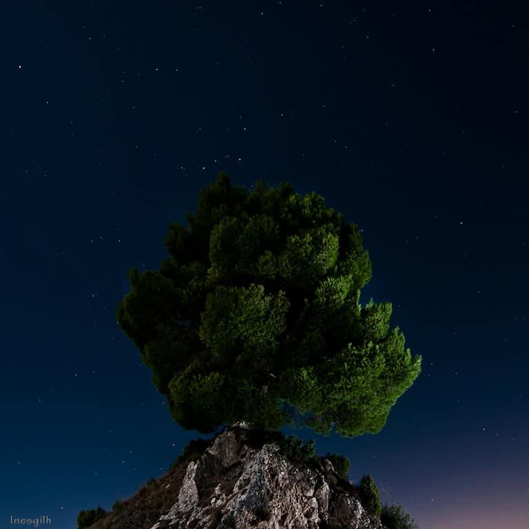 Fotografía Nocturna. Inés Gil