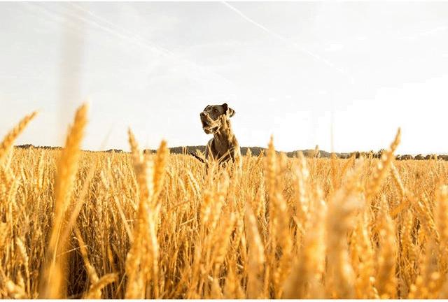 Finalistas V Reto Instagram Animales