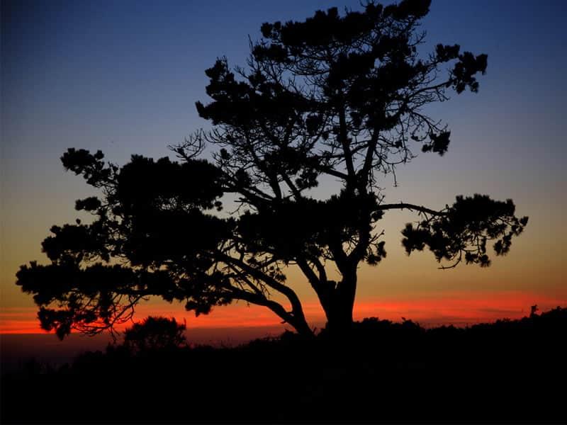 IX Concurso de Fotografía ambiental