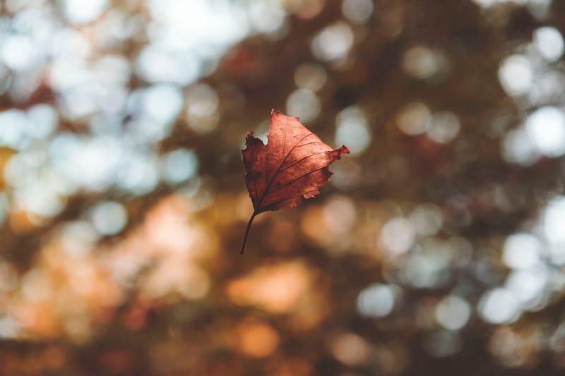 Los mejores concursos de fotografía de octubre 2018