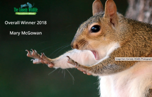 2019 Comedy Wildlife Photographer of the Year