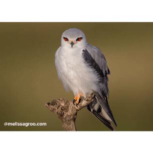 Concurso fotográfico KingBirder