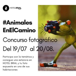 #AnimalesEnElCamino
